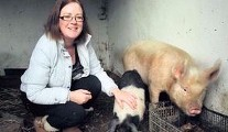 How Margaret's farm animals are tickled pink
